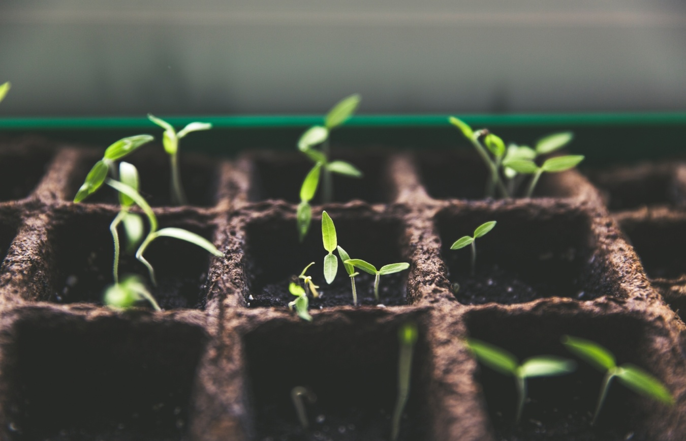 The Newbie's Guide to B2B Lead Nurturing